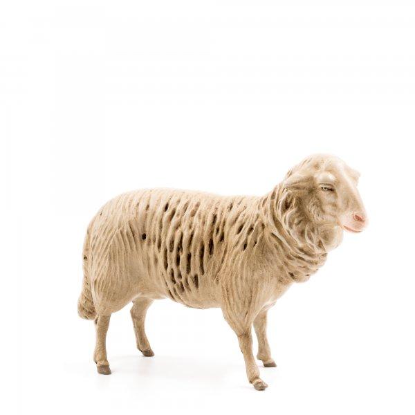 Schaf zur Seite blickend, zu 21cm Figuren