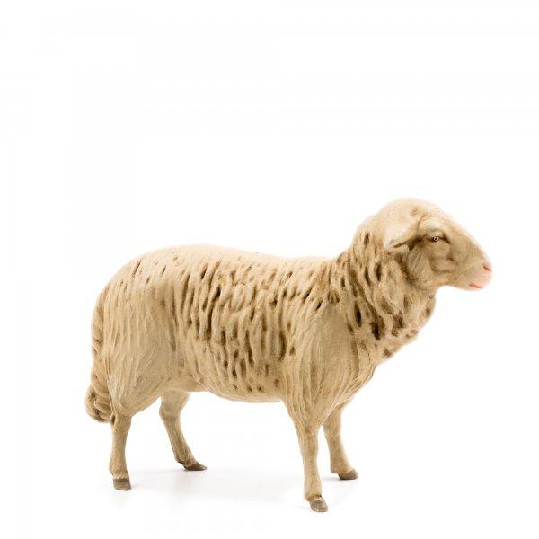 Schaf geradeaus blickend, zu 21cm Figuren