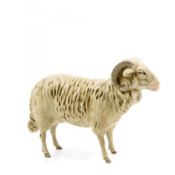 Ram, to 8.5 in. figures