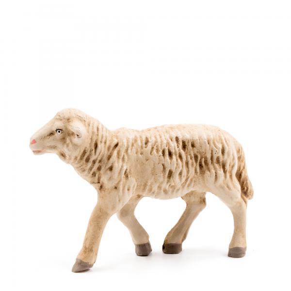 Schaf geradeaus blickend, zu 11 - 12cm Figuren