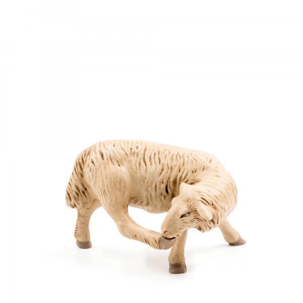 Schaf Bein leckend, zu 14cm Figuren passend
