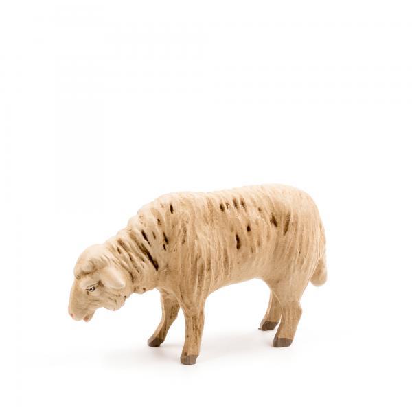 Schaf grasend, zu 14cm Figuren passend