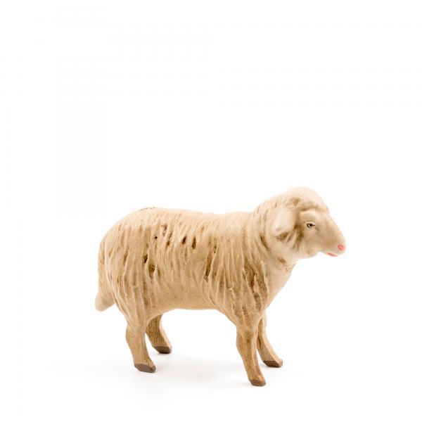 Schaf geradeaus blickend, zu 14cm Figuren passend